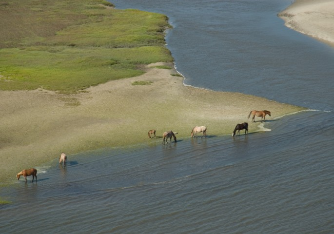 Cumberland Island Horses South End