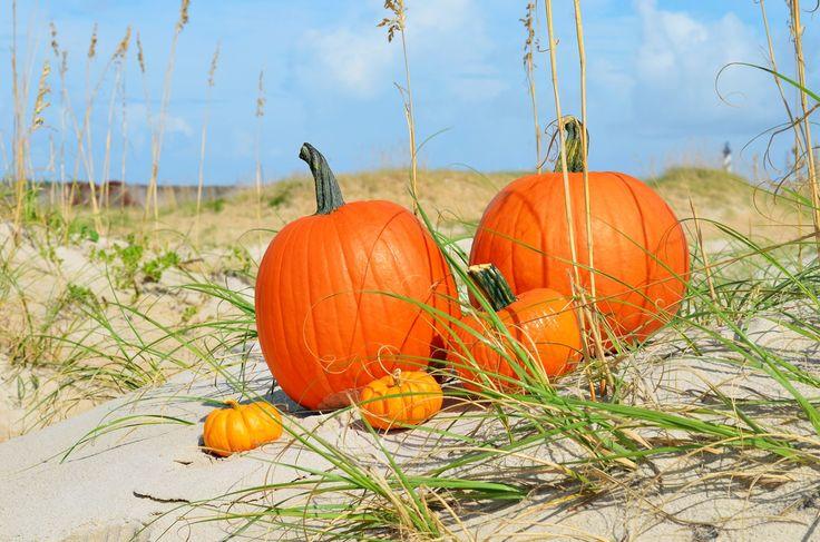 Pumpkin Island Resort
